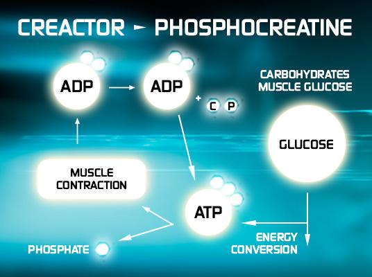 muscletech-creactor-info.jpg